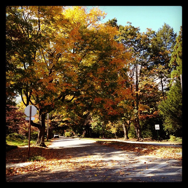 Fall in Maryland is awesome!